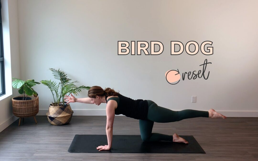 How to Do the Bird Dog Exercise: Postpartum Core Exercise